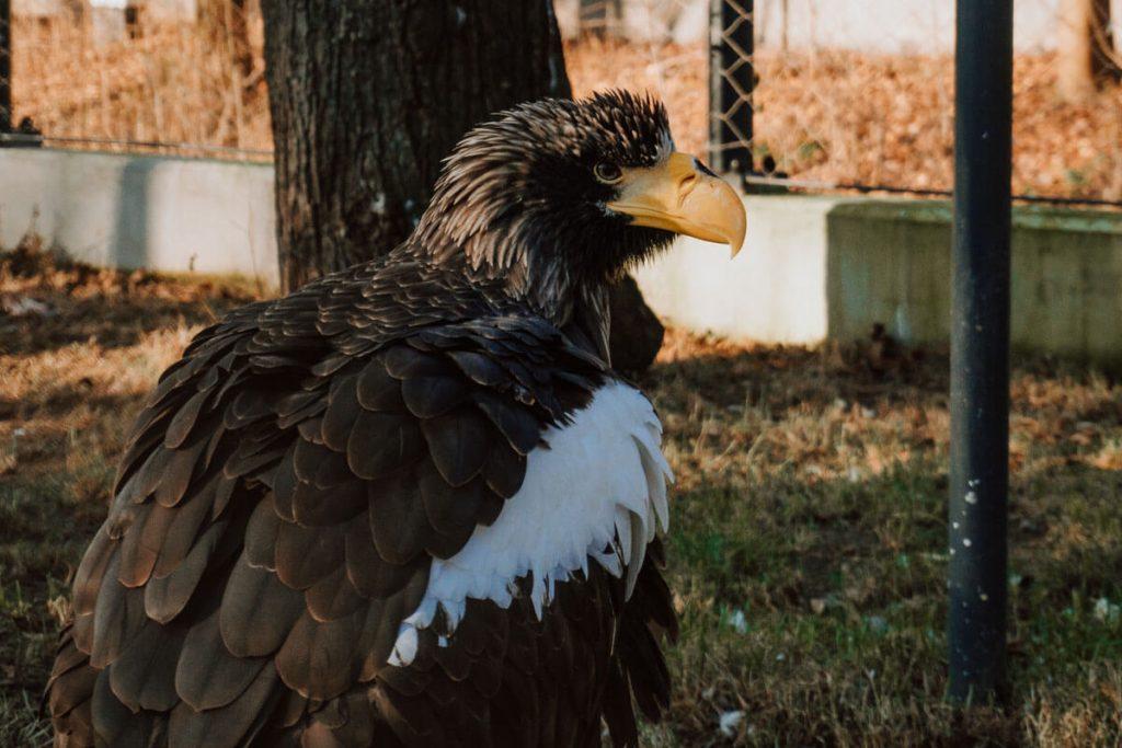 zoo konstantynowska