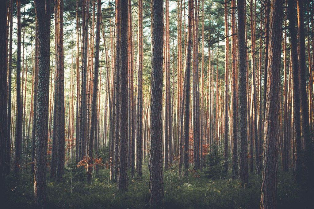 Gostyninsko Włoclawski Park Krajobrazowy las