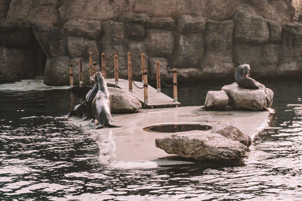 foki w opolskim zoo