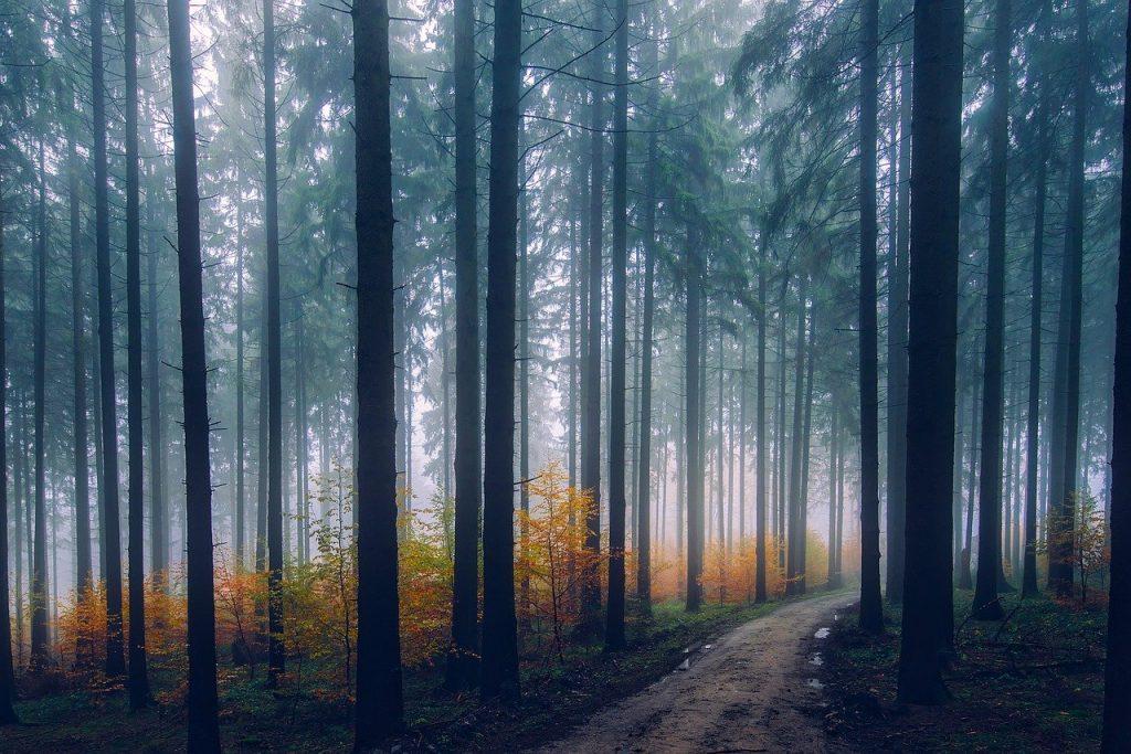 zamkniete lasy
