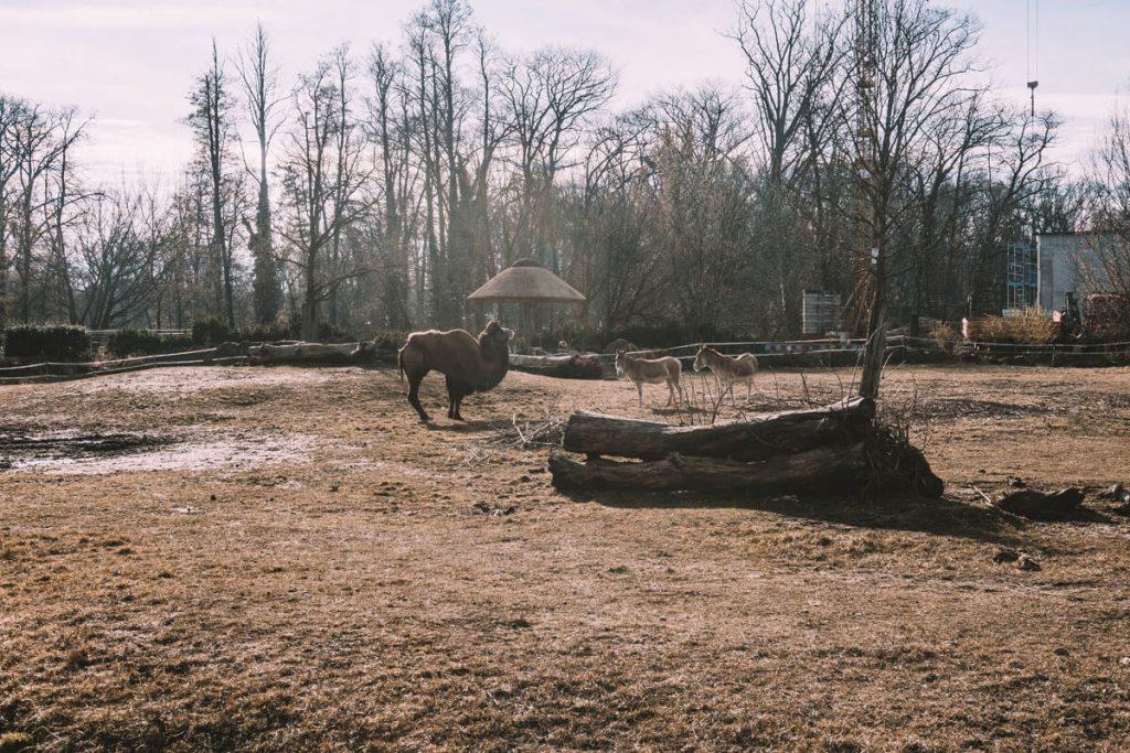zoo opole0011