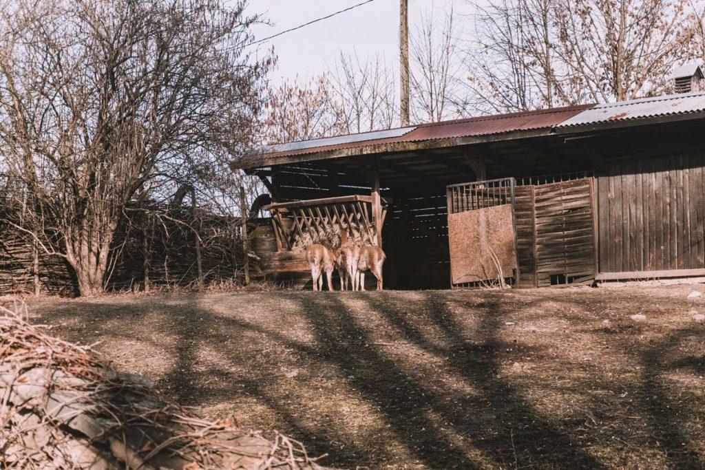 zoo opole0013