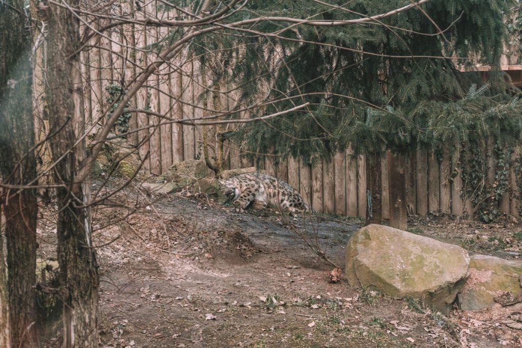 zoo opole0016
