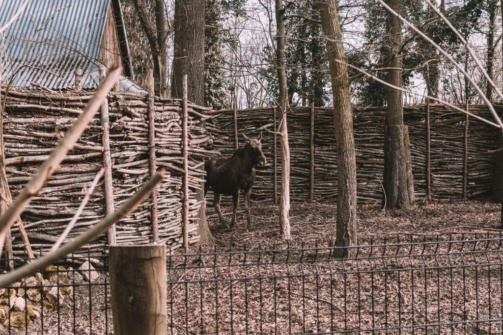 zoo opole0017