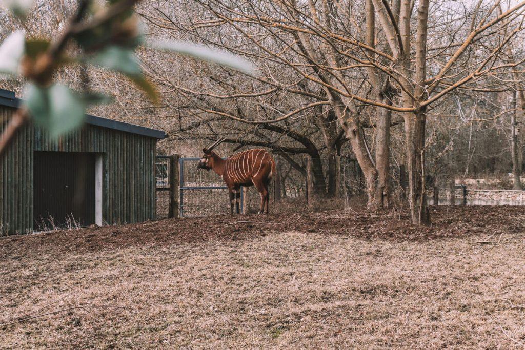 zoo opole0018