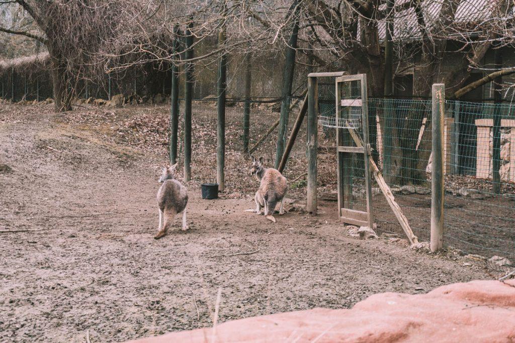 zoo opole0020