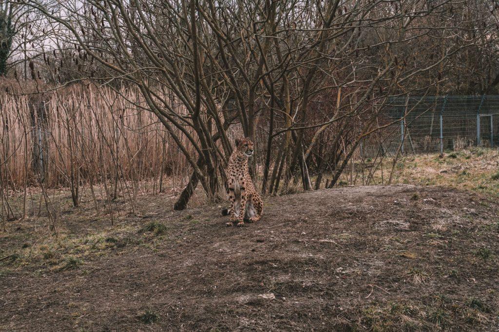 zoo opole0021