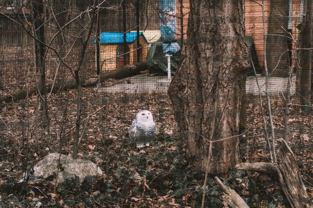 zoo opole0022