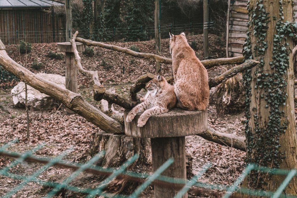 zoo opole0023