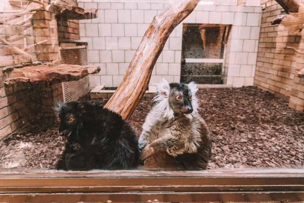 zoo opole0024