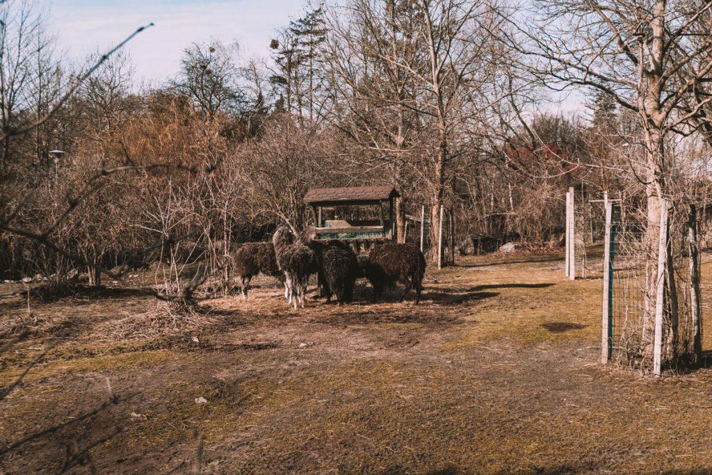 zoo opole0027