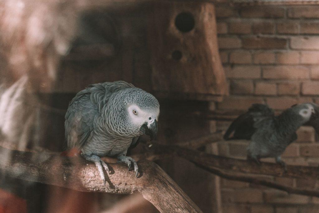 zoo opole0028