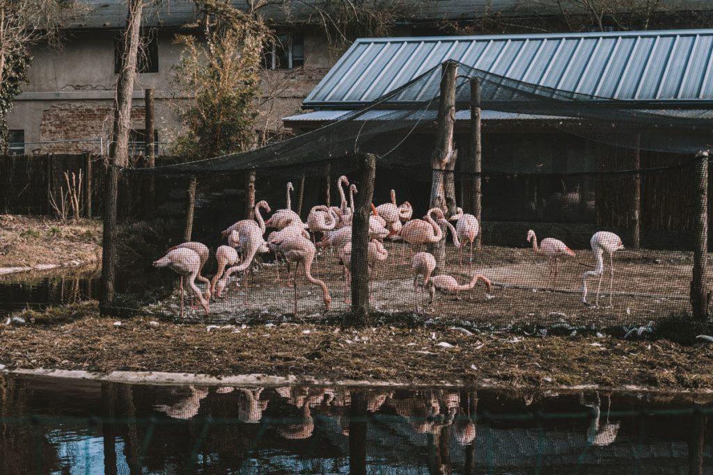 zoo opole0029