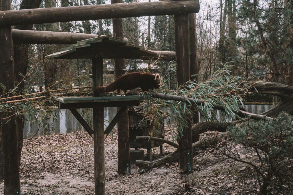 zoo opole0031