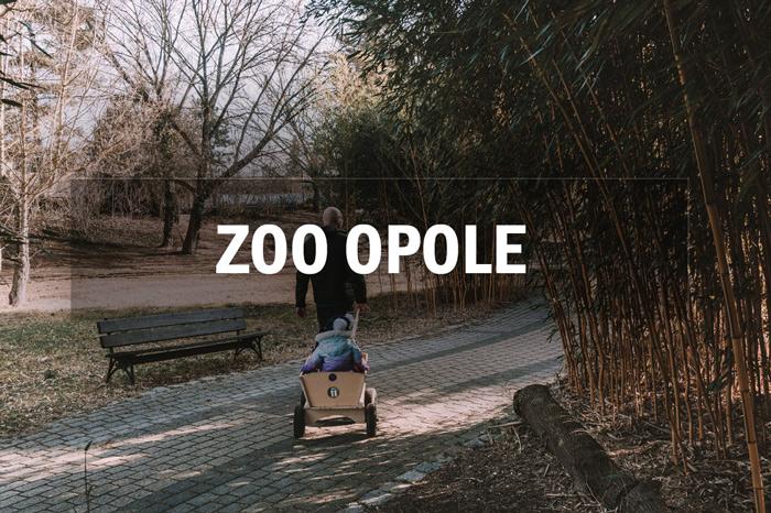 zwiedzanie zoo opole