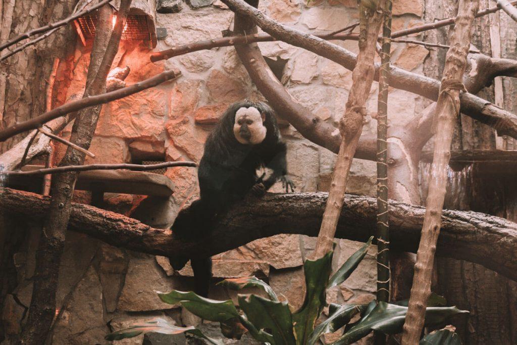 zwierzeta w opolskim zoo