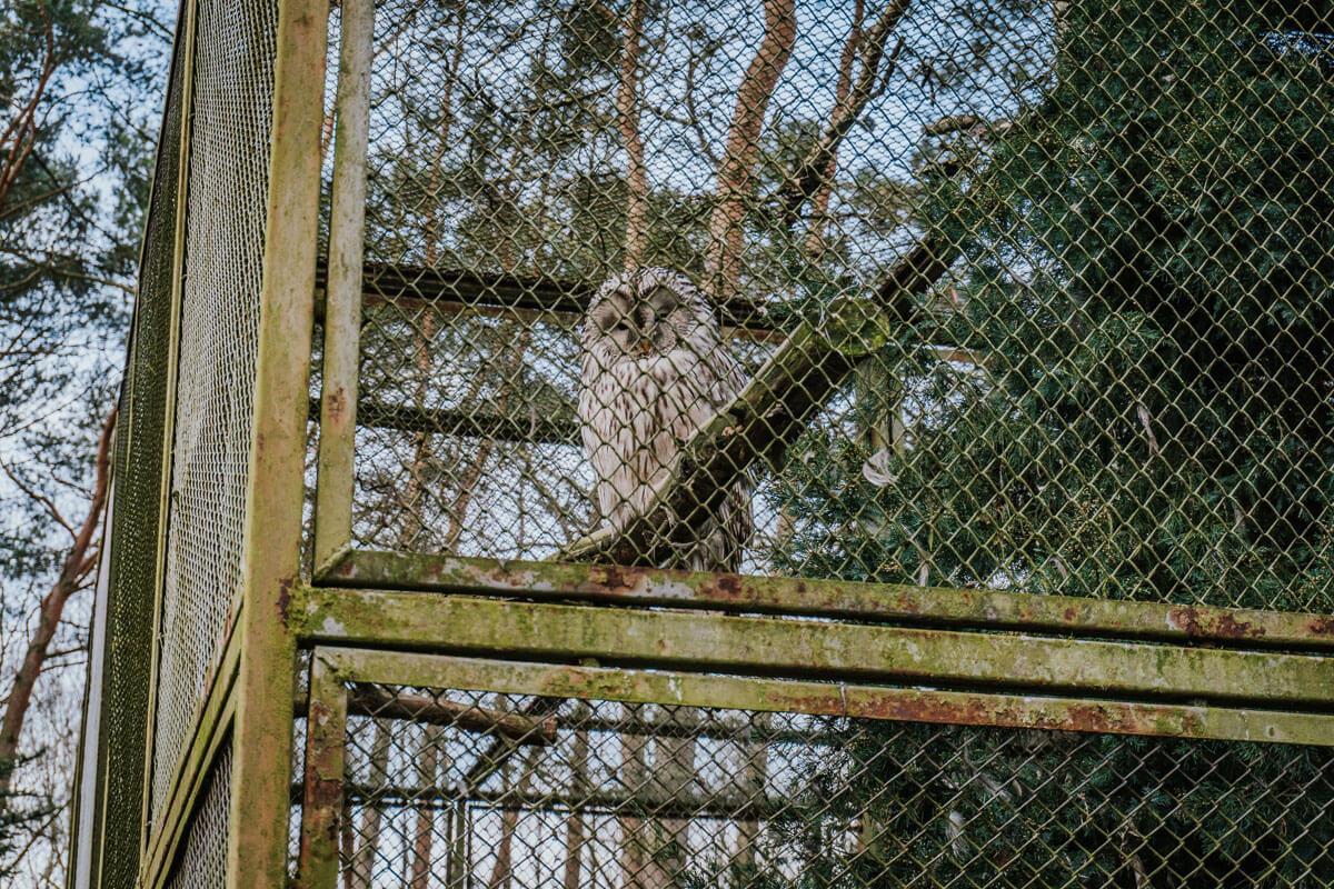 ogród zoologiczny Bydgoszcz