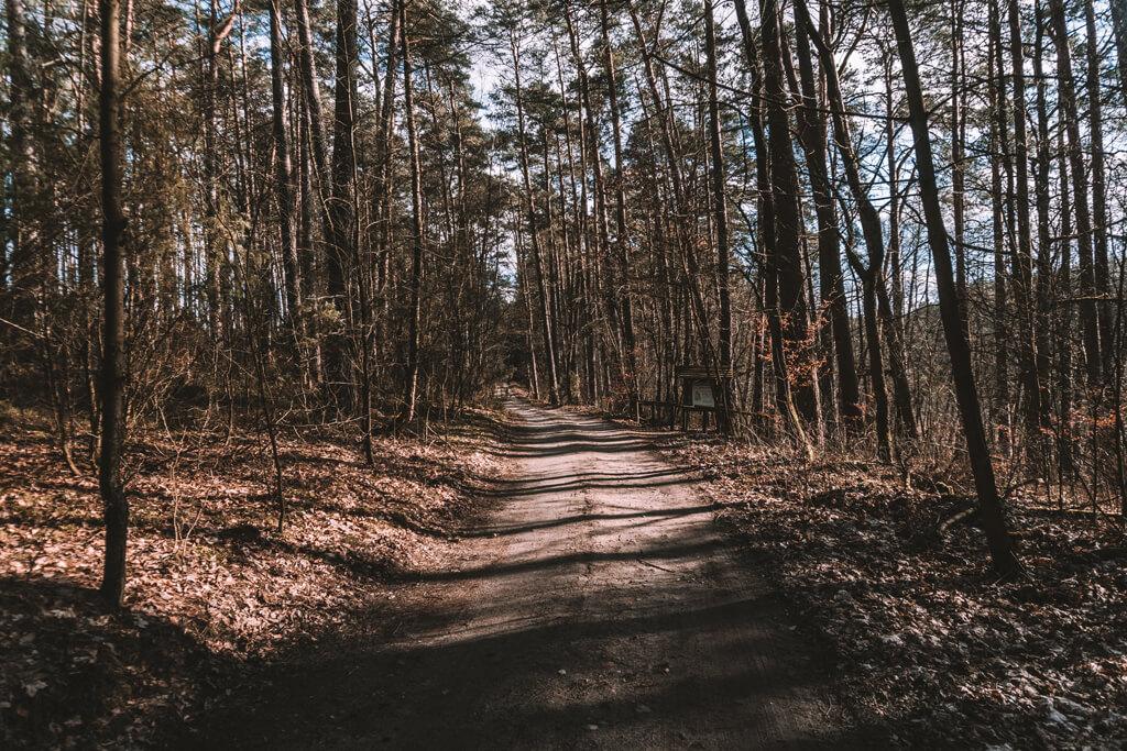 Ścieżka w Borach Tucholskich - Jelenia Wyspa
