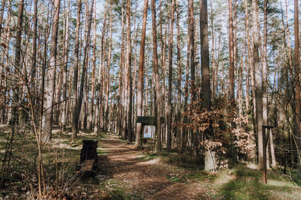 Bory Tucholskie - Wieża widokowa