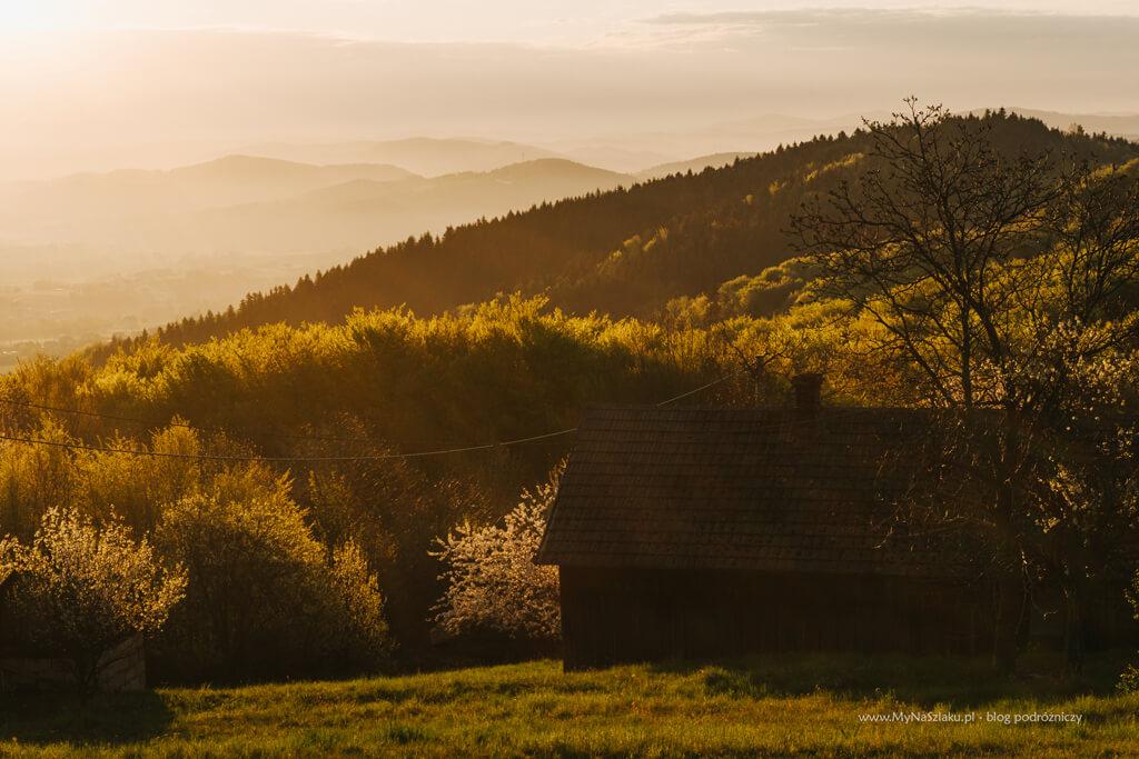 Wiosenny widok na las