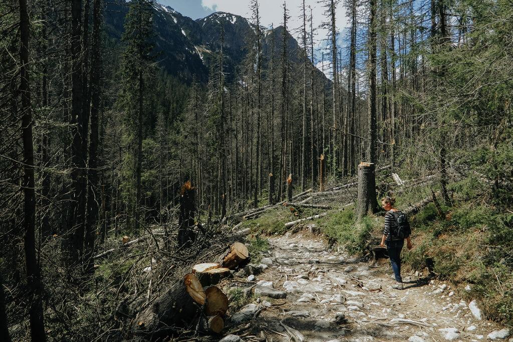 Droga Doliną Roztoki do Wodospadu Siklawa