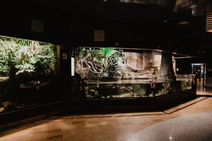 Akwarium w Gdyni