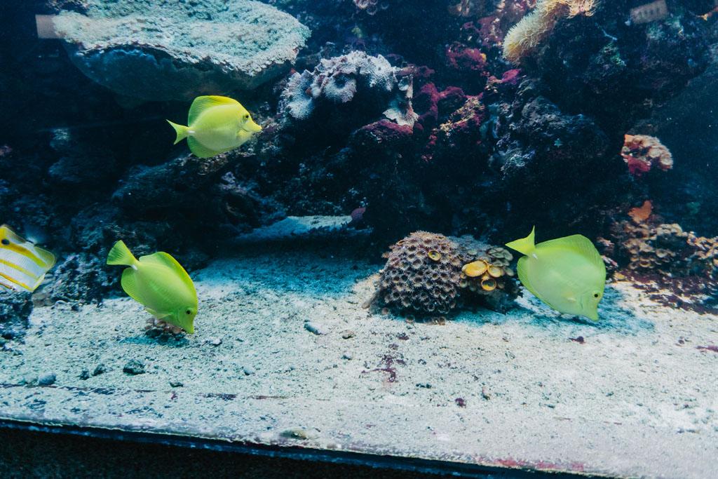 Oceanarium Gdynia