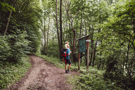 Dolina Brzoskwinki pod Krakowem