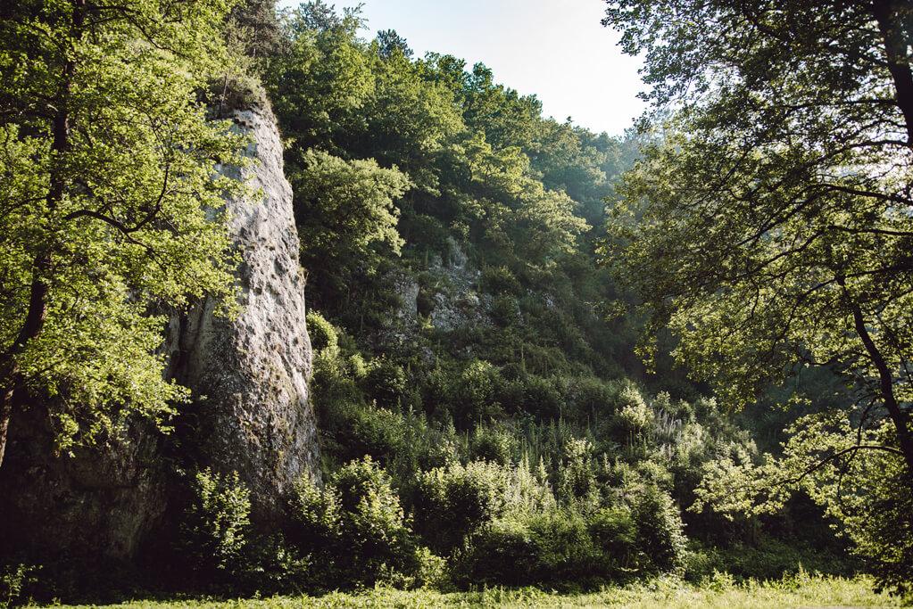 Dolina Mnikowska - widok na drzewa i skały