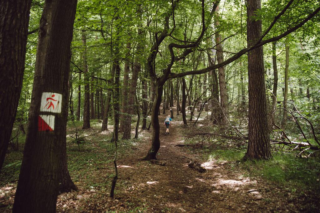 Oznakowanie ścieżki w Dolinie Aleksandrowickiej