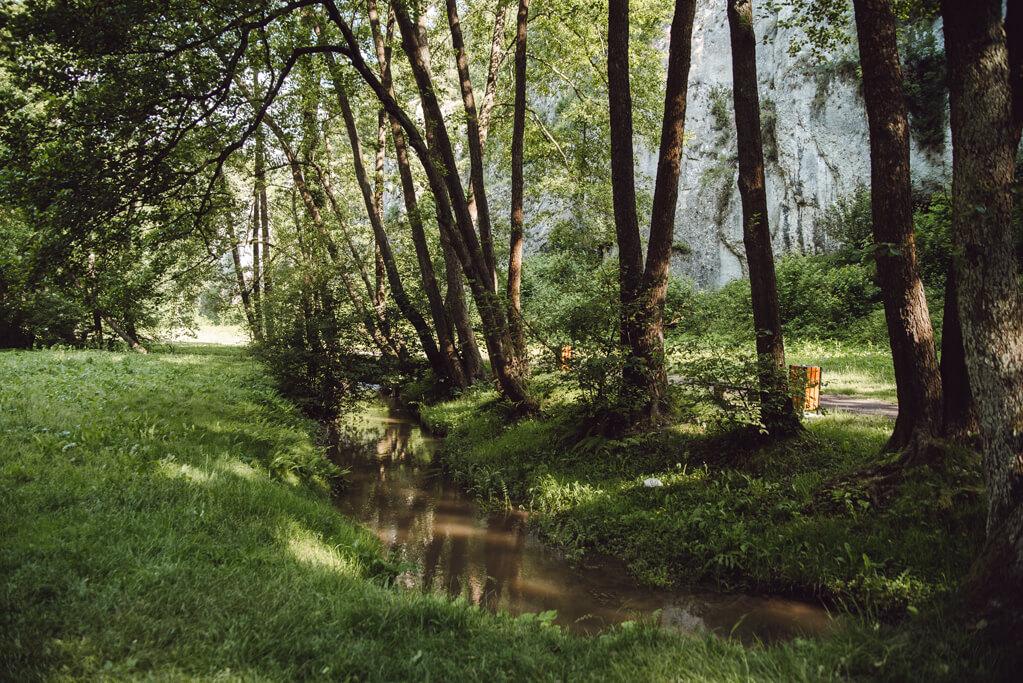 Potok Sanka przepływający przez Dolinę Mnikowską