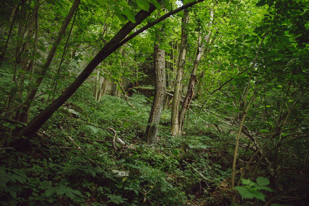 Ścieżka między drzewami w Rezerwacie Zimny Dół