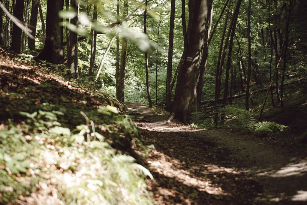 Szlak przez Wąwóz Półrzeczki