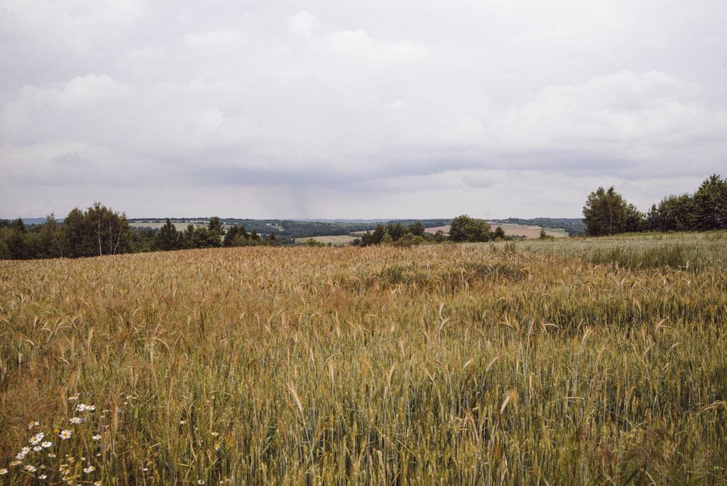 Widoki z Doliny Brzoskwinki