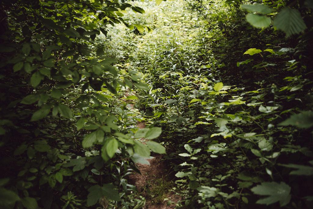 Zakrzaczony szlak w Dolinie Brzoskwinki