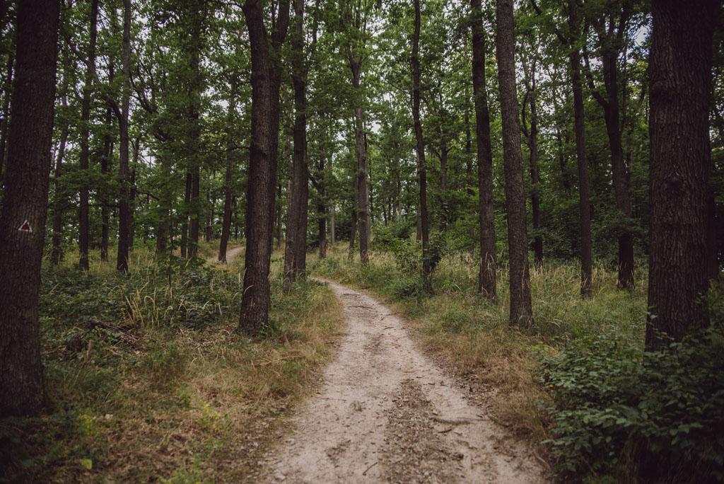Droga do wieży widokowej na Radogoście