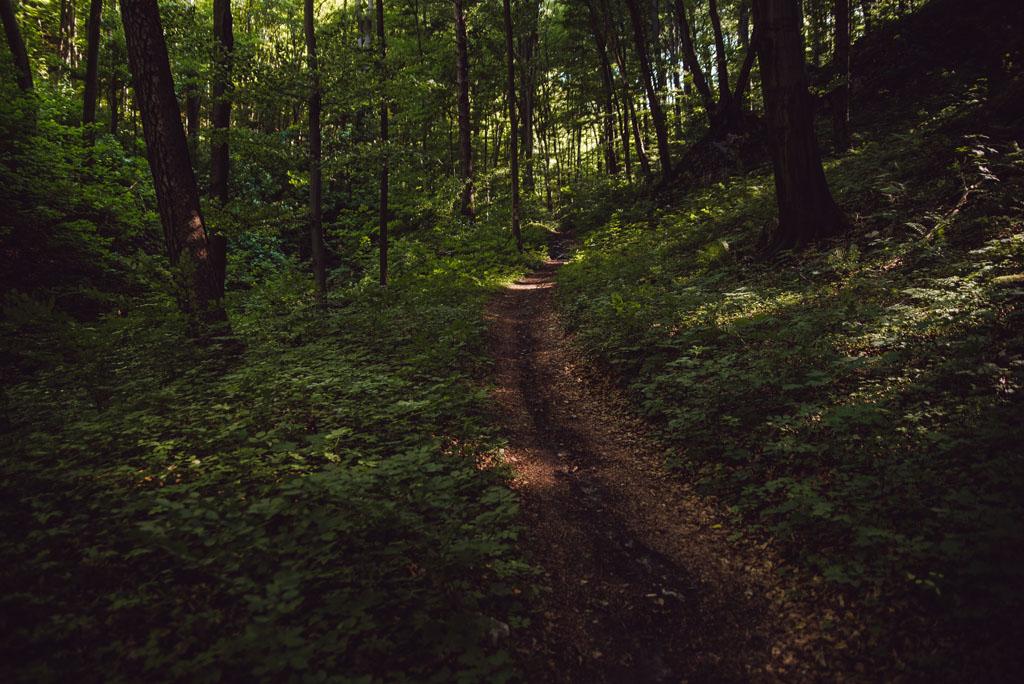 Ścieżka w Dolinie Racławki