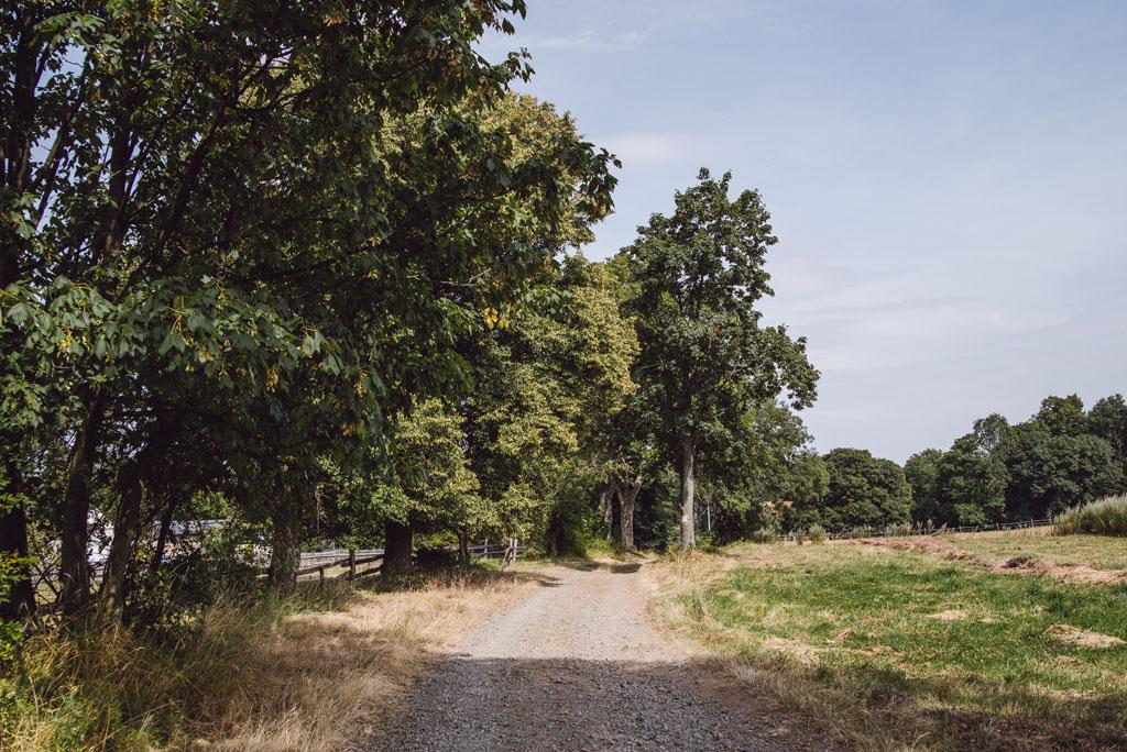 Szlak do Wąwozu Myśliborskiego