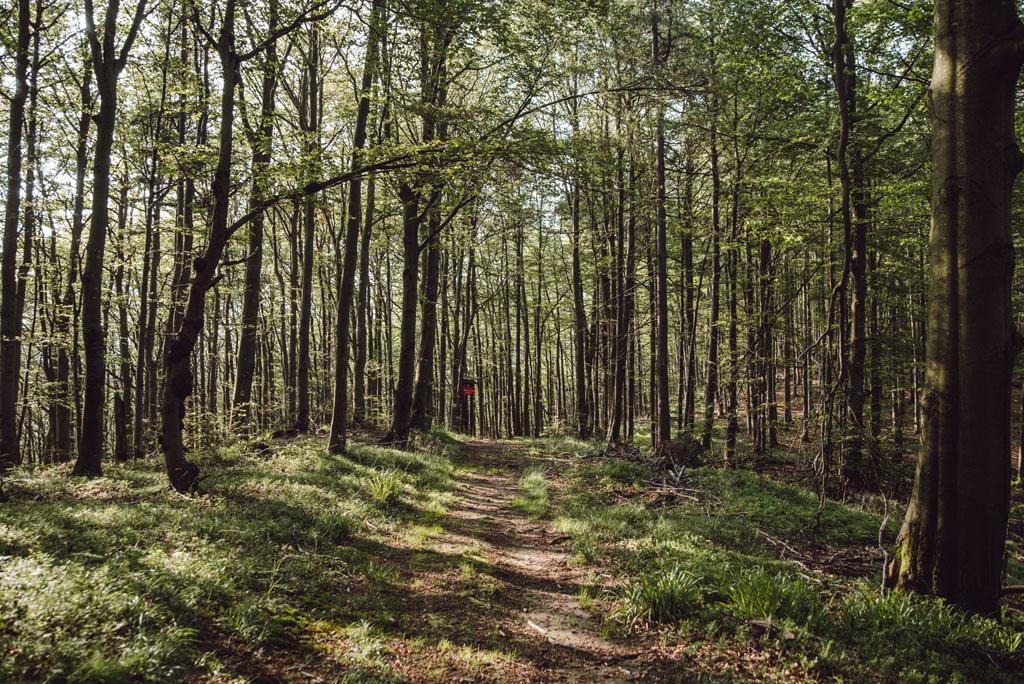 Szlak na  Przełęcz Bukowinki