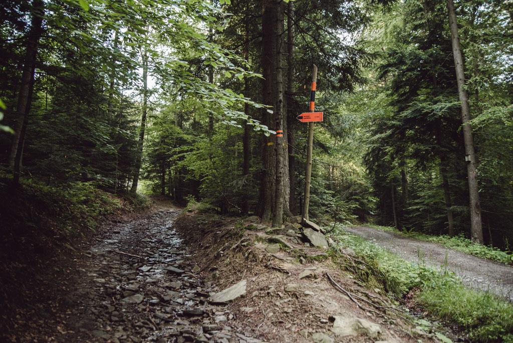 Szlak narciarski Złotne - Beskid Sądecki