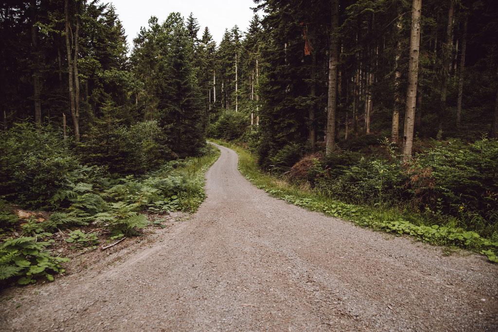 Trawers Kostrzy - leśna droga