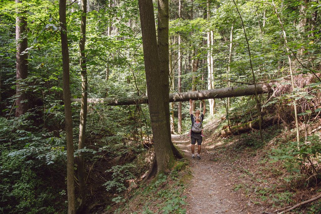 Szlak przez Wąwóz Myśliborski
