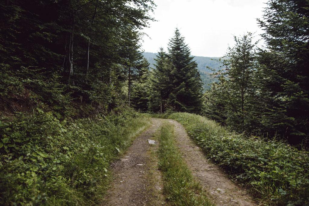 Zejście drogą z Sokołowskiej Góry