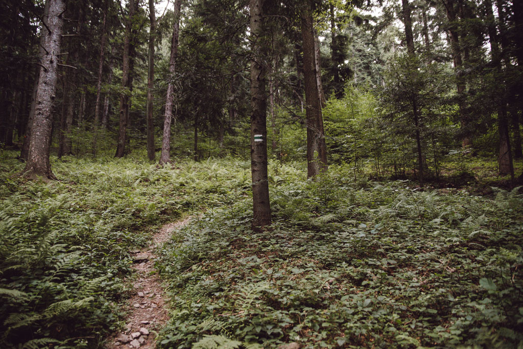 Zielony szlak z Jodłownika na Kostrzę