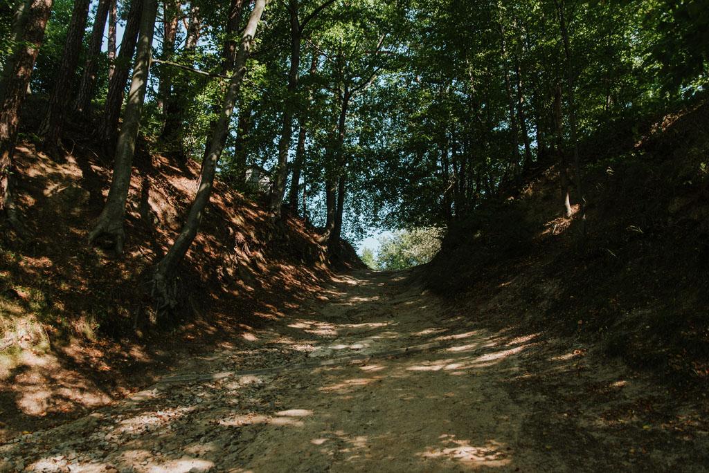 Droga leśna przy Zamku Kamieniec