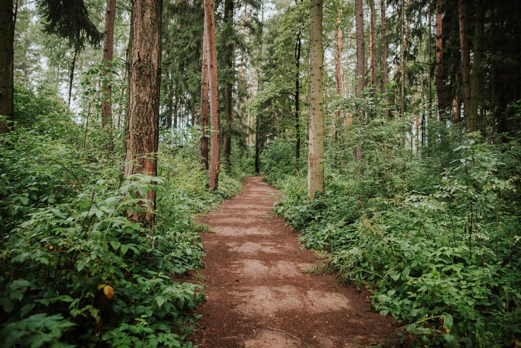 Droga do wieży widokowej w Gozdnie