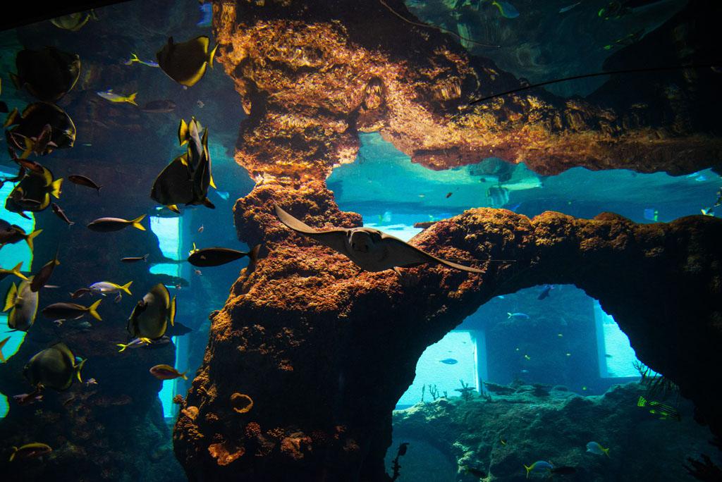 Ryby w Oceanarium Wrocław