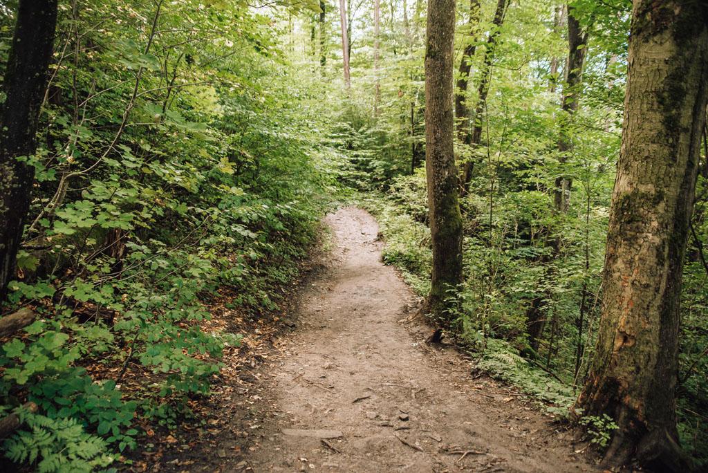 Droga prowadząca do Zamku Sobień