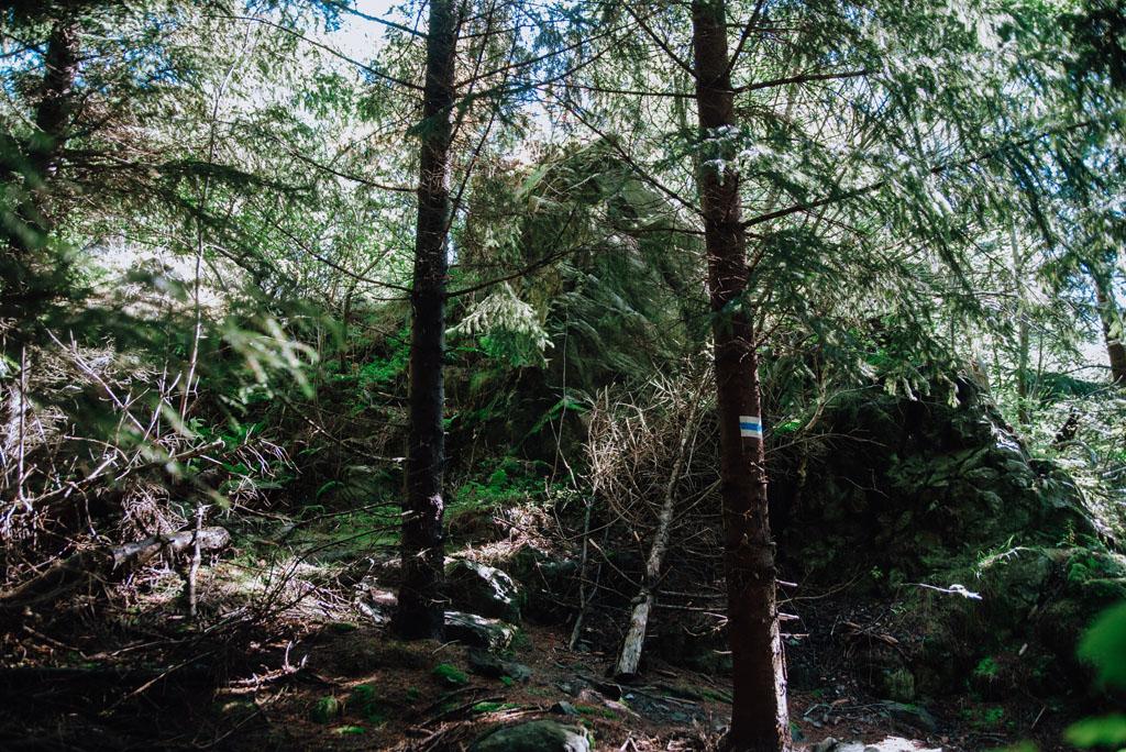 Szlak przez las ze skałami i mchem