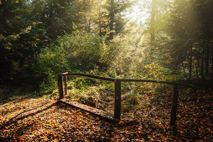 Las Plebański - ścieżka stowarzyszenia Konar